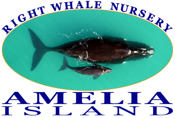 Amelia Island Right Whale Nursery Graphic